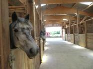 centre équitation