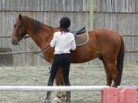 Essai trois cours d'équitation!
